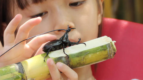 girl take care her fighting rhinoceros beetles Live Action