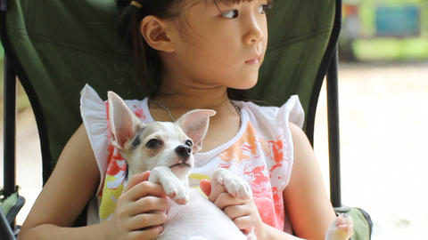 A little girl with her pet chihuahua dog Footage