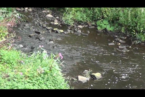 sheffield stream 1 Footage
