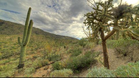 Cactus Clouds 2 Footage