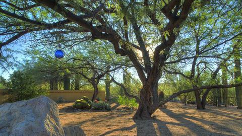 Desert Tree Sunrise 1 Live Action