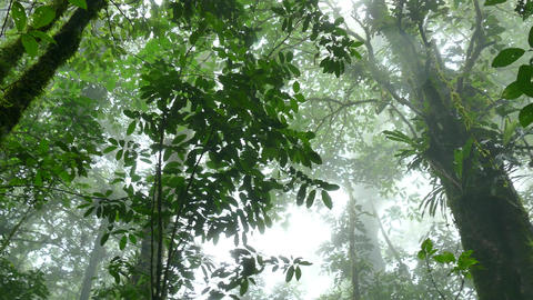 Rainforest Trees Jungle Fog Tenorio Volcano National Park Costa Rica Footage
