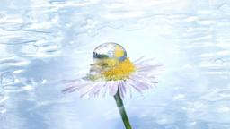 Liquid daisy background Animation