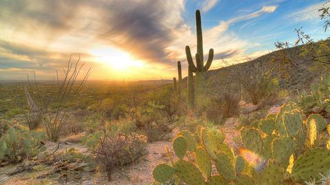 Cactus Sunset 4 Footage