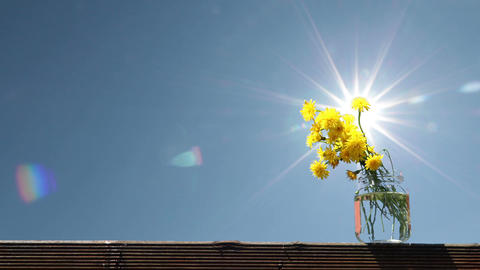 Flowers and sun Footage