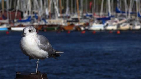 Gull on a concrete pillar. 4K Footage