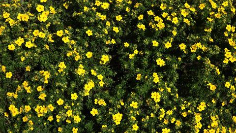 Night blindness. Yellow flowers. 4K Footage