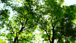 Woods forest, rotating trees background, green nature landscape, august, pan Footage
