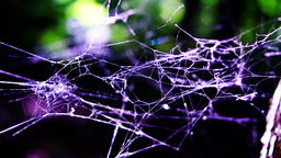 Intricate spider web in the forest Footage