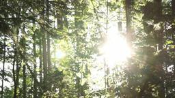 Sunny forest slider shot Footage