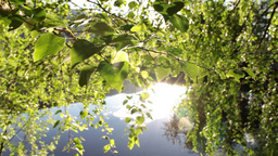 Green leaves and lake Footage