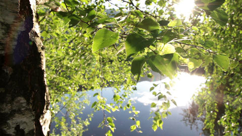 Sunny leaves and lake Footage