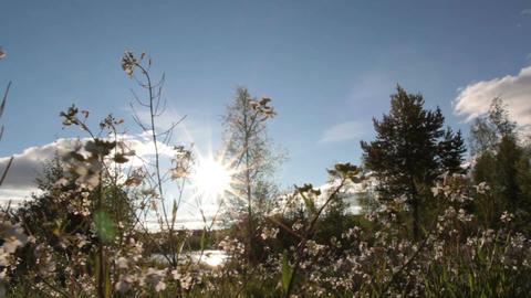 Flowers in summer Footage