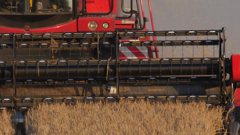 Combine harvester harvesting barley close, 4k, 25 fps Footage