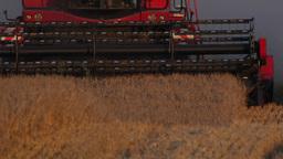 Close up of a combine harvester harvesting barley, 4k 25 fps Footage