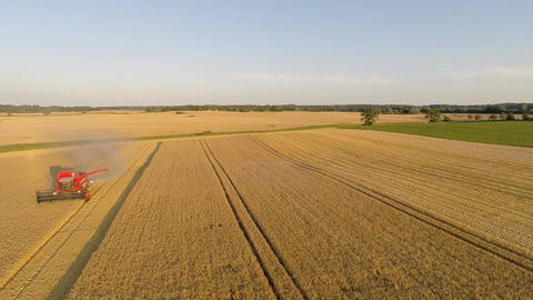 Aerial view of harvesting barley with a combine harvester Footage