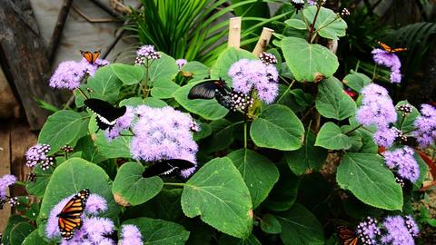 butterflies on plants Footage
