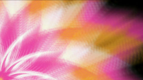 pink flower &... Stock Video Footage