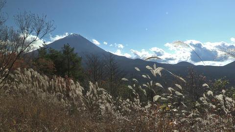 Autumn Landscape in Mt.Fuji,Yamanashi,Japan Stock Video Footage