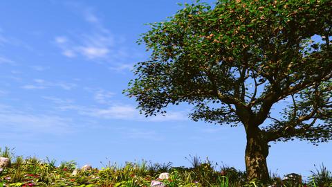 Summer tree on sunny hill Stock Video Footage
