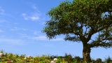 Summer Tree On Sunny Hill stock footage