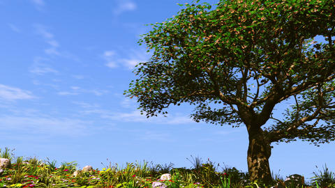 Summer tree on sunny hill Animation