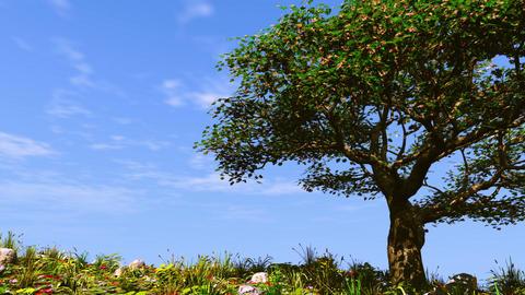 Summer tree on sunny hill CG動画素材
