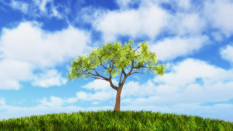 Growing tree on sunny hill Animation