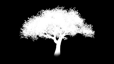 Growing tree - alpha chanel Stock Video Footage