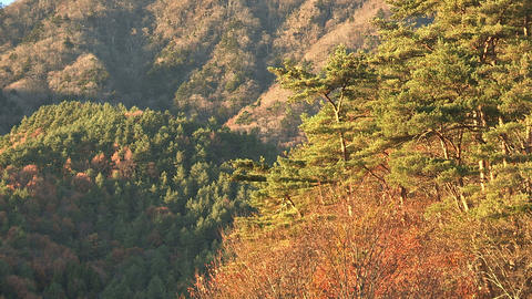 Autumn Leaves and Extensive Forest in Sai... Stock Video Footage
