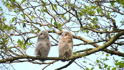 Night Owls Stock Video Footage