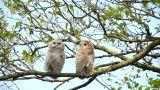 Night Owls Footage