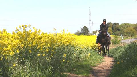 Horseback riding Stock Video Footage