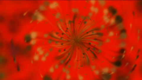Dandelion seeds being blown,rotation petals &... Stock Video Footage