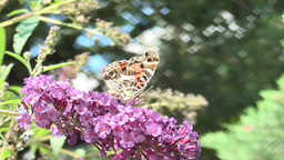 Butterfly Walking on Flowers Live Action