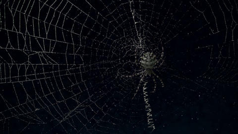 argiope spider in its web at night Footage