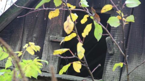 abandoned old barn door Footage