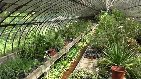 Indoor Botanical Garden Stock Video Footage