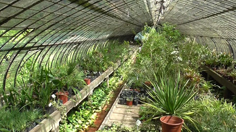 Indoor Botanical Garden stock footage