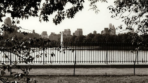Central Park in New York Live Action