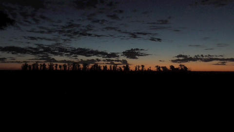 Darkness Evening , Sunrise in the forest Footage