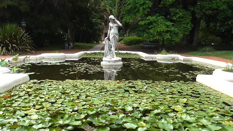 Water Pond with Aquatic Plants Live Action