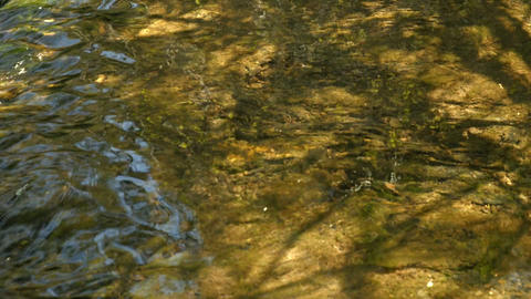 Slowly moving water in the stream Footage