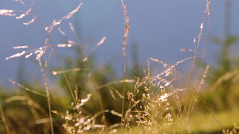Grass, Trees and Morning. Follow Focus Footage
