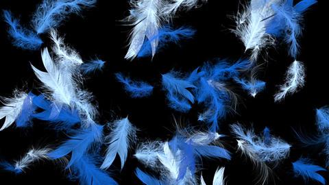Blue Bird Feathers - Flying Loop - II Animation