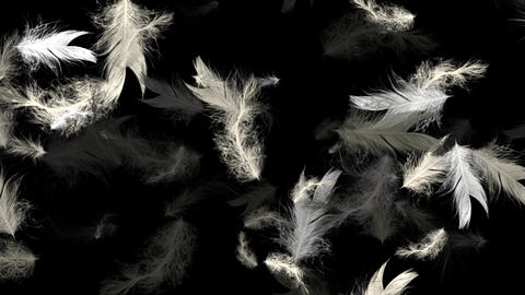 Black White Bird Feathers - Flying Loop - II Animation