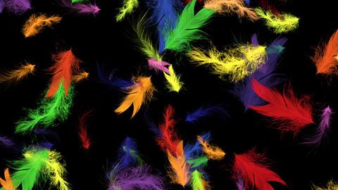 Rainbow Bird Feathers - Flying Loop - II Animation