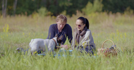 Young Couple At A Picnic With A Dog stock footage
