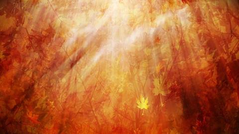 Autumn foliage background loop Animation