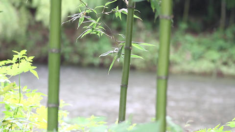 bamboo river Footage